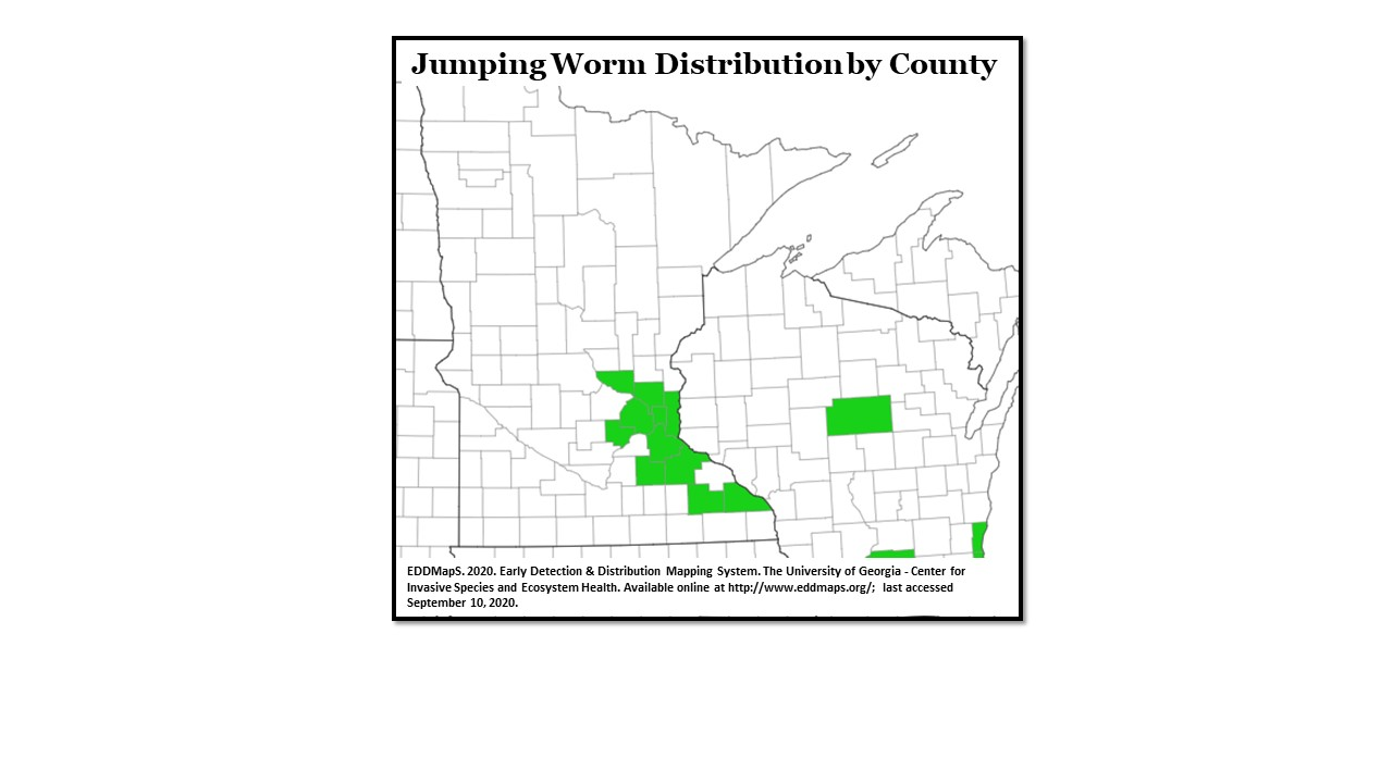 Jumping Worm Distribution by County
